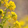 Photos: 春の足音♪