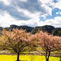 Photos: 石神菜の花畑にて(1/8)