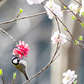 Photos: 松戸21世紀の森と広場にて(3/10)