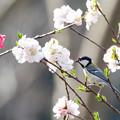 Photos: 松戸21世紀の森と広場にて(4/10)