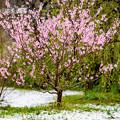 Photos: 季節外れの雪の後・・(3/6)