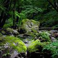 Photos: 栃木・県民の森にて(4/5)