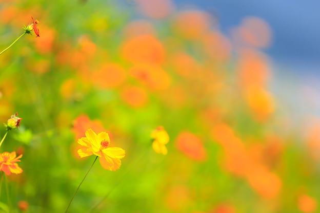 Photos: 河口湖・大石公園にて その5