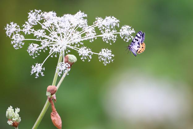 小さな蝶^^