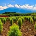 Photos: 河口湖 大石公園にて その4