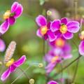 Photos: 咲き乱れる~