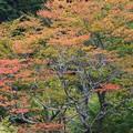 秋の足音 その1