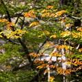 Photos: 秋の足音 その2