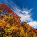Photos: 磐梯吾妻スカイラインの紅葉 その5