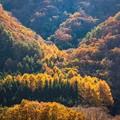 Photos: 芦川渓谷付近にて その2