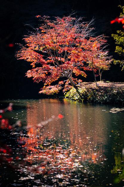 千葉・小松寺の紅葉 その1