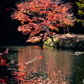 Photos: 千葉・小松寺の紅葉 その1