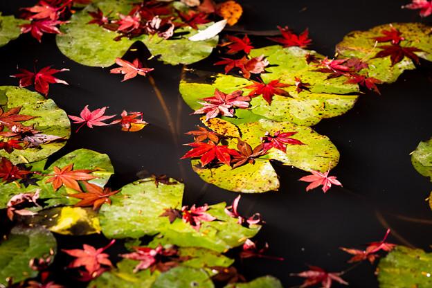 千葉・小松寺の紅葉 その2