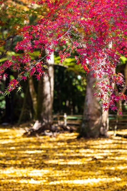 千葉・小松寺の紅葉 その3