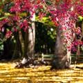 Photos: 千葉・小松寺の紅葉 その3
