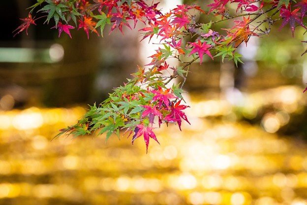 千葉・小松寺の紅葉 その4