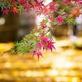 Photos: 千葉・小松寺の紅葉 その4