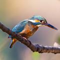 Photos: 青い鳥の日^^ その1