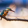 Photos: 青い鳥の日^^ その3