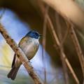 Photos: 青い鳥の日^^ その4