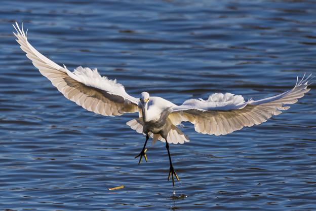水元公園の野鳥たち その1