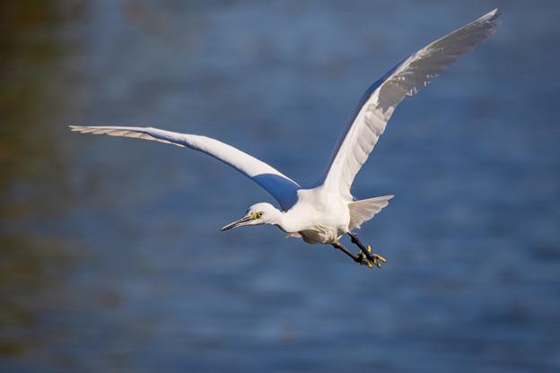 水元公園の野鳥たち その2