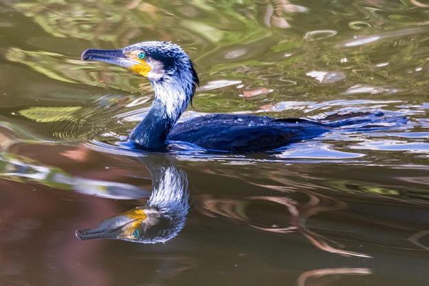 水元公園の野鳥たち その3