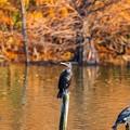 水元公園の野鳥たち その4