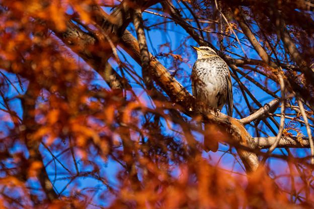 水元公園の野鳥たち その5