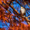 Photos: 水元公園の野鳥たち その5