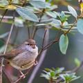 水元公園の野鳥たち その6