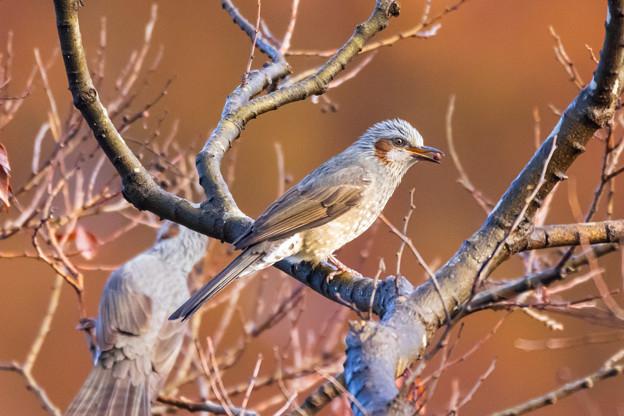 水元公園の野鳥たち その7