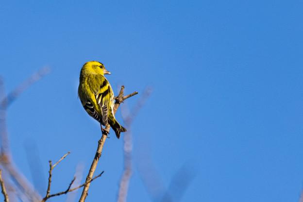 水元公園の野鳥たち その8