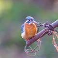 水元公園の野鳥たち その9
