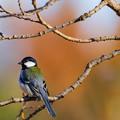 水元公園の野鳥たち その10