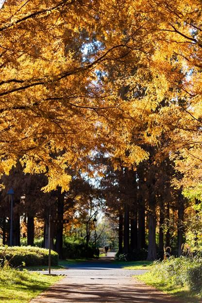 水元公園 メタセコイアの森 その1