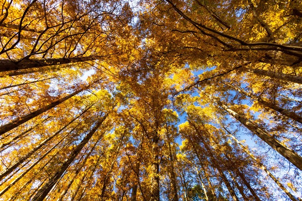 水元公園 メタセコイアの森 その2
