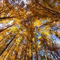Photos: 水元公園 メタセコイアの森 その2
