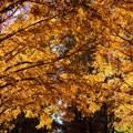 Photos: 水元公園 メタセコイアの森 その3