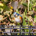 幸せを呼ぶ青い鳥^^ その1