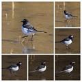 スケート鳥w