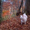 Photos: 船形山の秋を歩く
