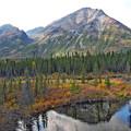 Photos: アラスカの山の秋色
