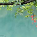 蔵王どっこ沼湖面の秋の始まり