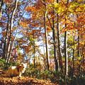 Photos: 船形山の秋を歩く(2)