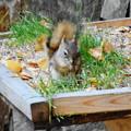 Photos: 食欲の秋(アラスカのロッジで)
