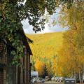 全山黄色(アラスカで)
