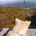 Photos: 山犬:ゴンドラから