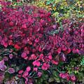実も葉も真っ赤っか