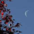 Photos: 紅葉と有明の月